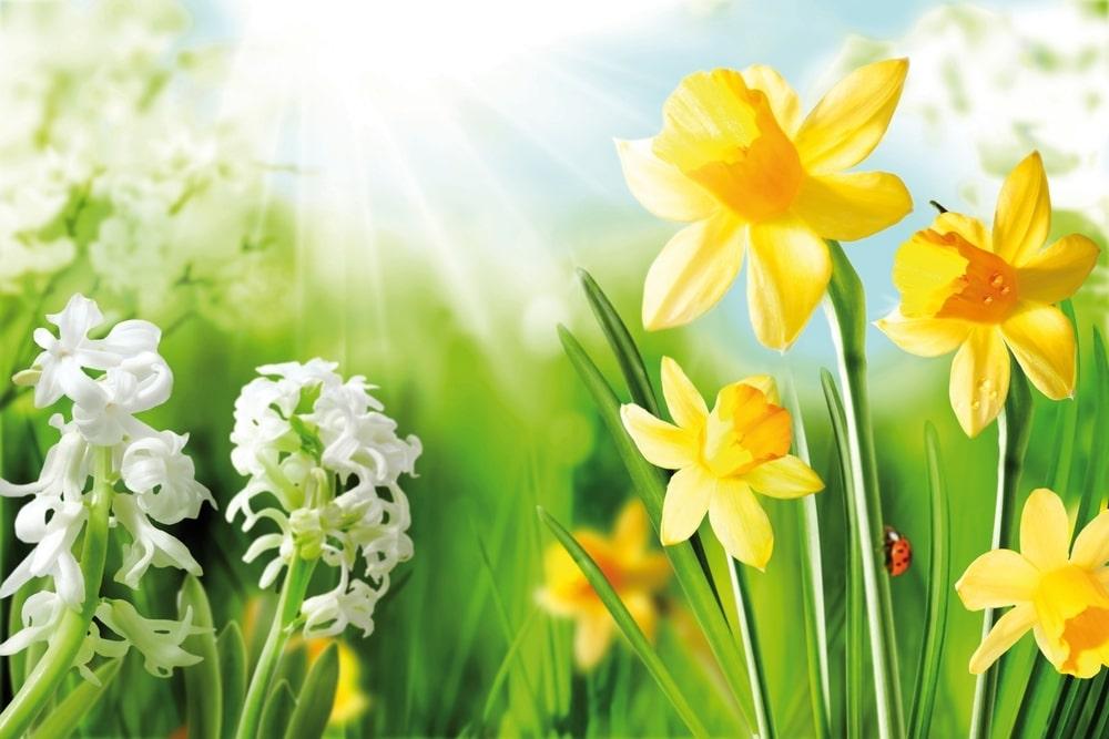 De lente wist het niet (gedicht)